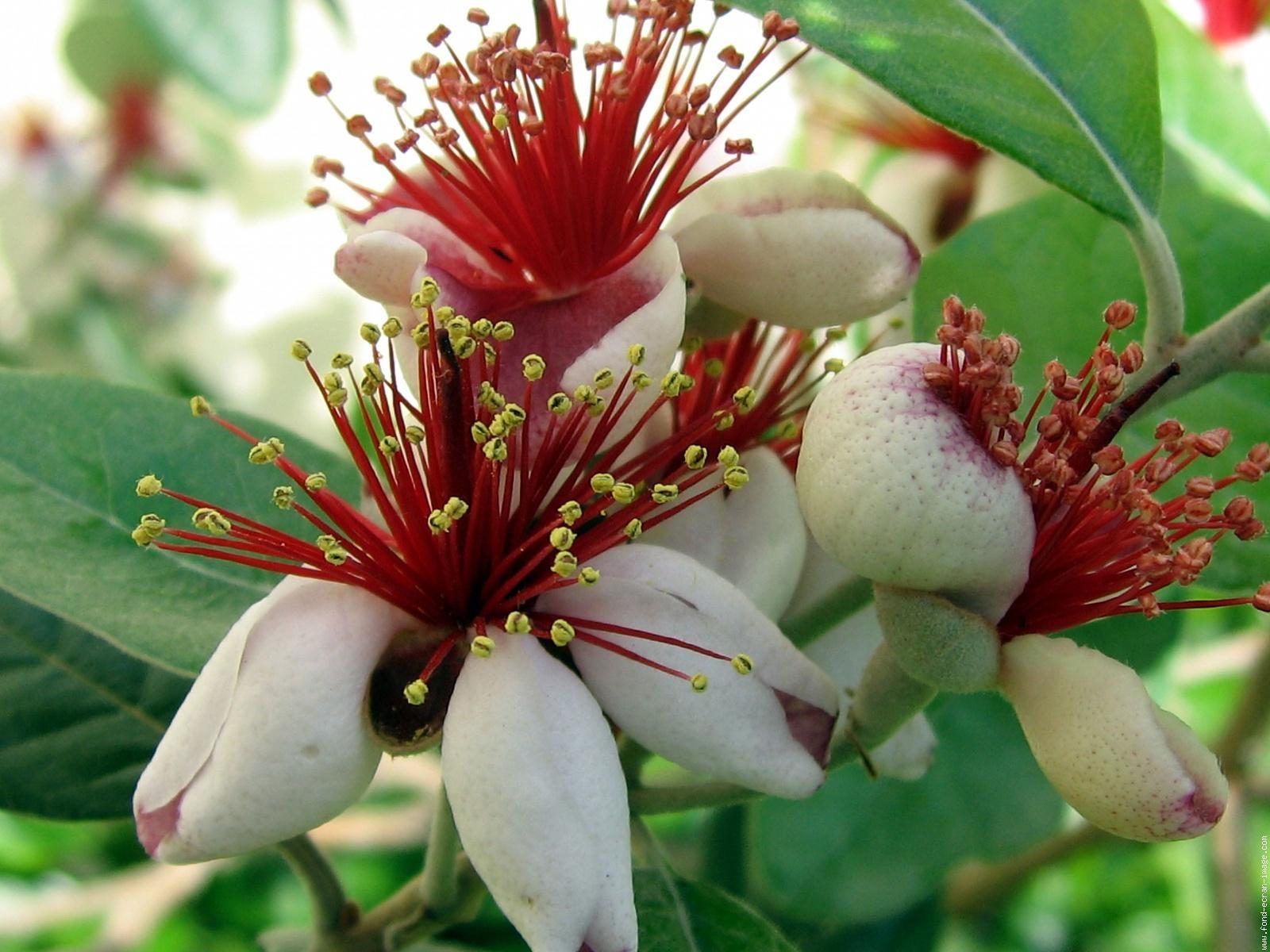 Mediteraanse bloeiende planten