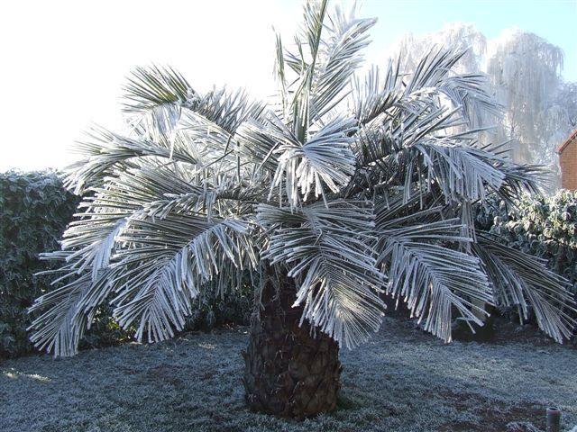 Winterbescherming, Universele thermostaat